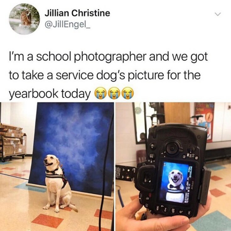 Product - Jillian Christine @JillEngel I'm a school photographer and we got to take a service dog's picture for the yearbook today