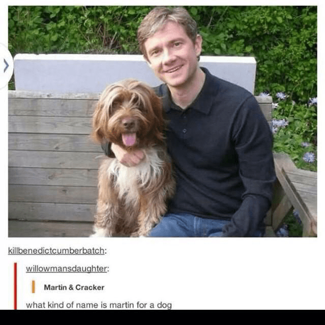 Dog - killbenedictcumberbatch: willowmansdaughter Martin & Cracker what kind of name is martin for a dog