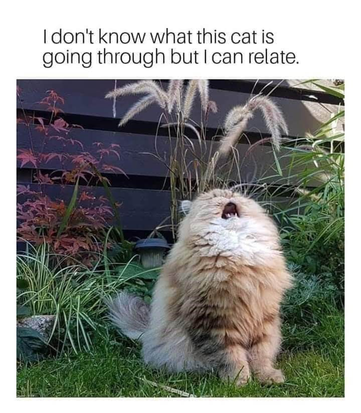 Text - Adaptation - I don't know what this cat is going through but I can relate.