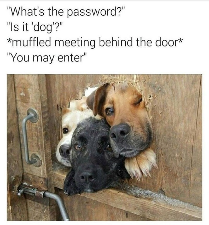 """Dog - """"What's the password?"""" """"Is it 'dog'?"""" muffled meeting behind the door* """"You may enter"""""""