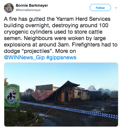 "Text - Bonnie Barkmeyer BonnieBarkmeyer Follow A fire has gutted the Yarram Herd Services building overnight, destroying around 100 cryogenic cylinders used to store cattle semen. Neighbours were woken by large explosions at around 3am. Firefighters had to dodge ""projectiles"". More on @WINNEWS_Gip #gippsnewter aram Servic terd"