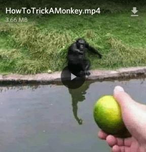 Text - Tennis ball - HowToTrickAMonkey.mp4 3.66 MB