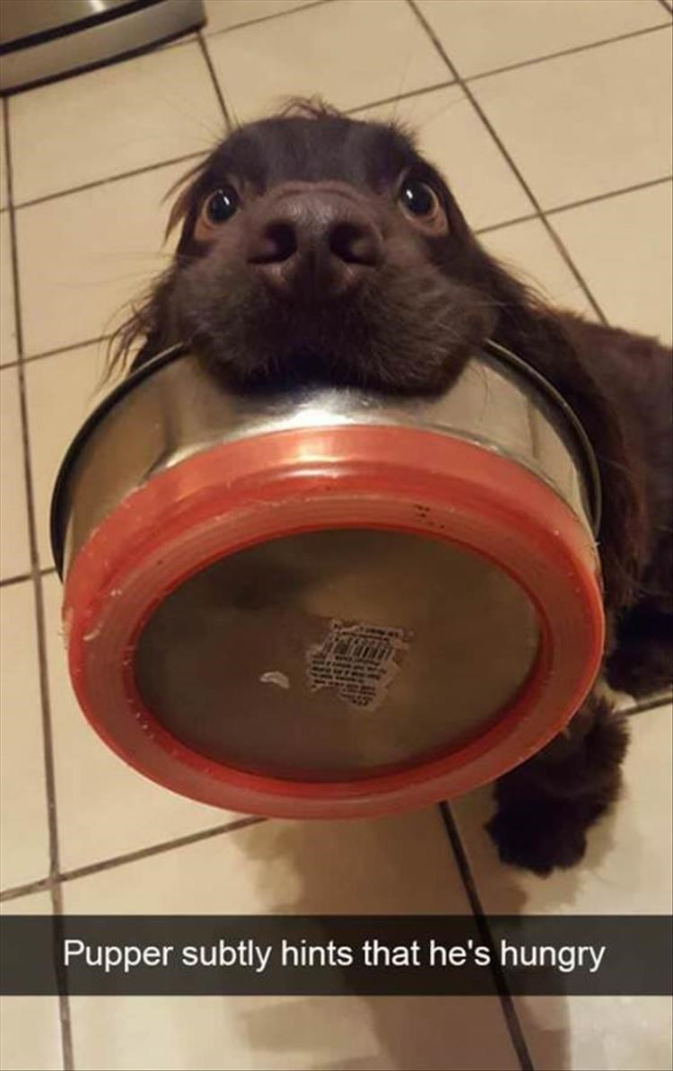 Snout - Pupper subtly hints that he's hungry $1R