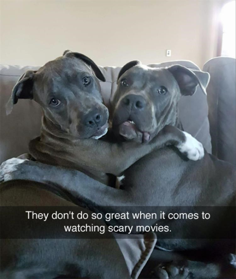 Dog - They don't do so great when it comes to watching scary movies.
