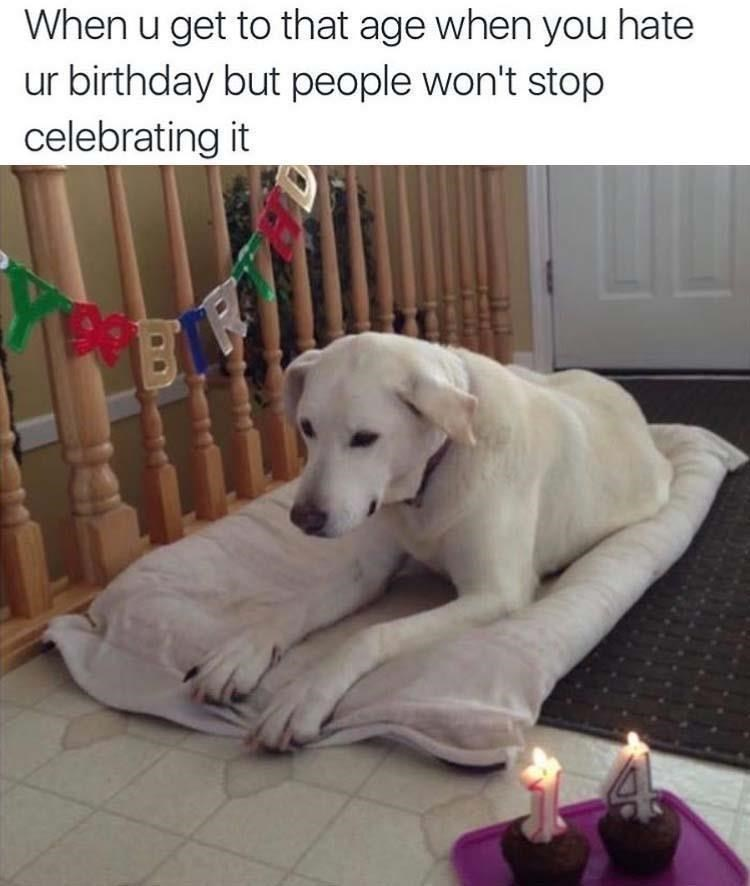 Dog - When u get to that age when you hate ur birthday but people won't stop celebrating it
