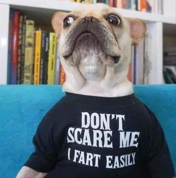 Dog - DON'T SCARE ME FART EASIL EUR