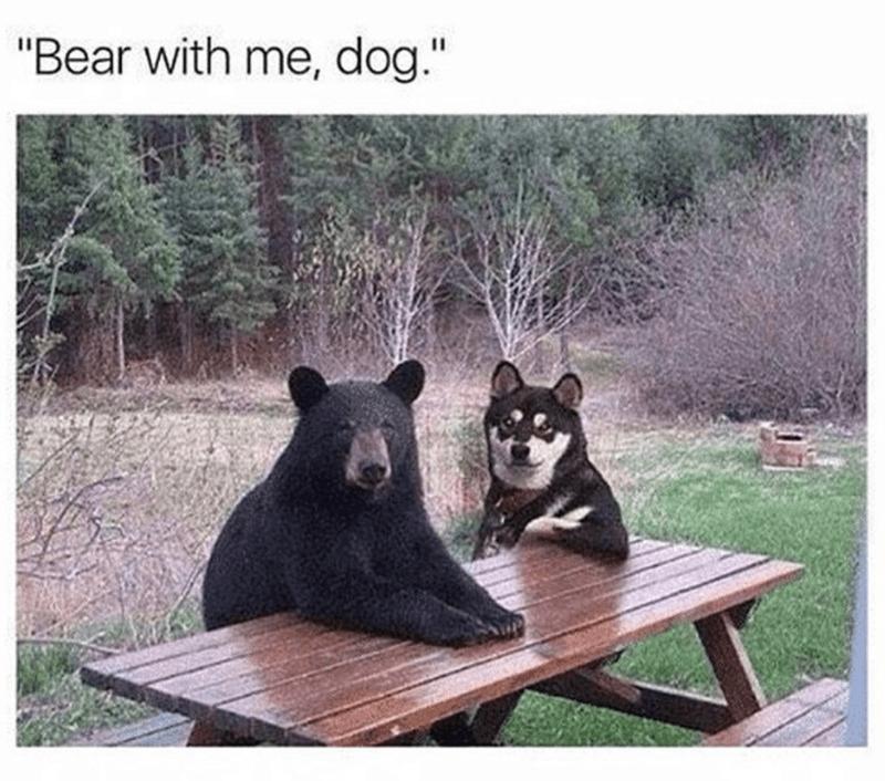 "Vertebrate - ""Bear with me, dog."""