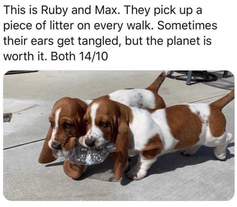Dog - This is Ruby and Max. They pick up a piece of litter on every walk. Sometimes their ears get tangled, but the planet is worth it. Both 14/10