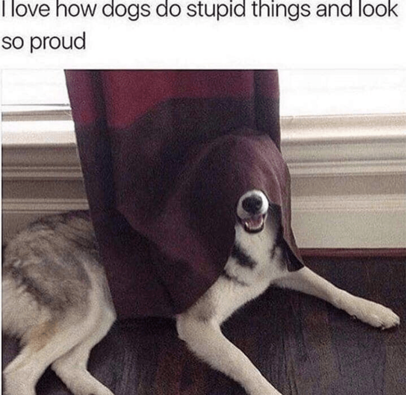Canidae - I love how dogs do stupid things and look So proud