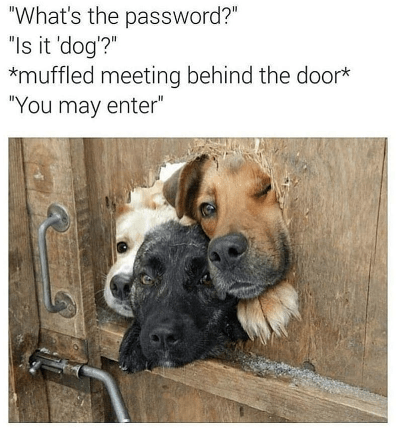 "Dog - ""What's the password?"" ""Is it 'dog'?"" *muffled meeting behind the door* ""You may enter"""