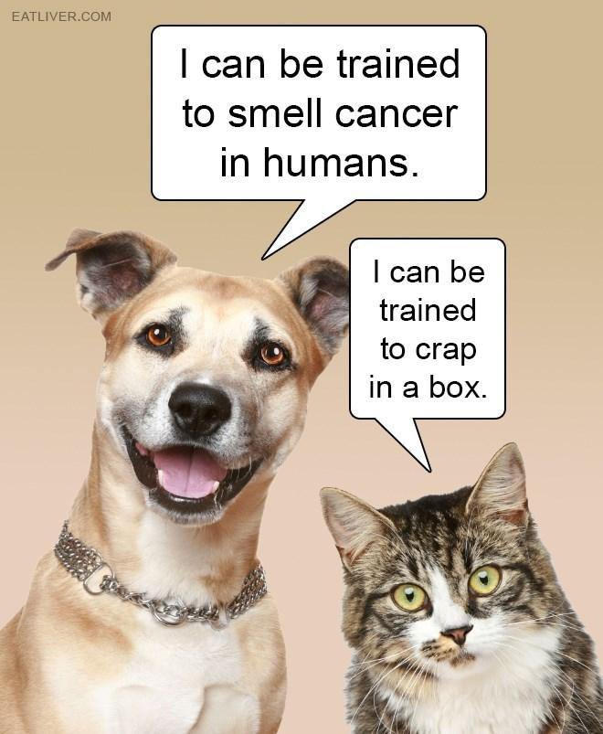 dog memes cat memes - 9361184512