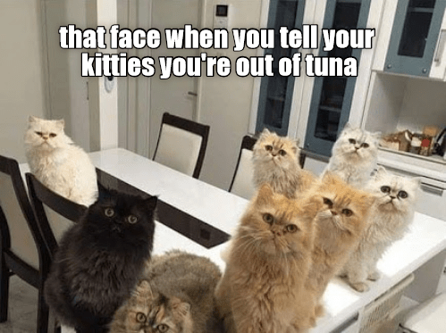 Cat - that face when you tell your kitties you're out of tuna