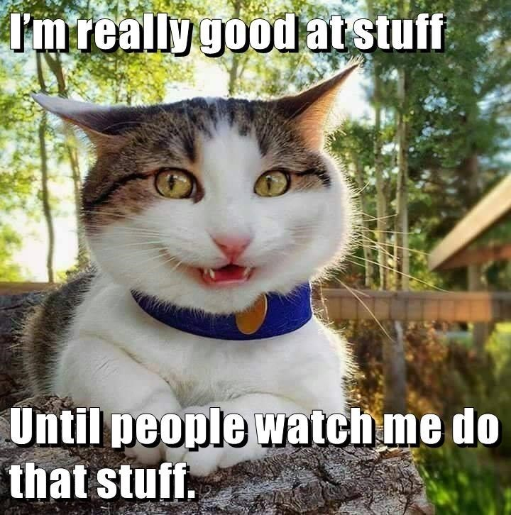 Cat - I'mreallygoodatstuff Until people watchme do that stuff