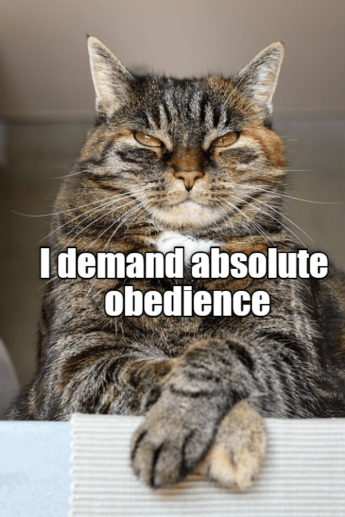Cat - Idemandabsolute obedience