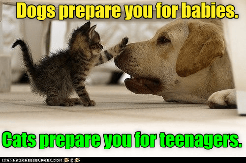 Mammal - Dogs prepare you for babies. Cats prepare you for teenagers. ICANHASCHEE2EURGER cOM
