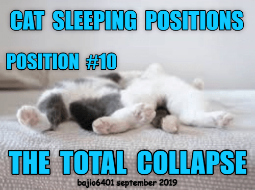 Text - CAT SLEEPING POSITIONS POSITION#10 THE TOTAL COLLAPSE bajio6401 september 2019