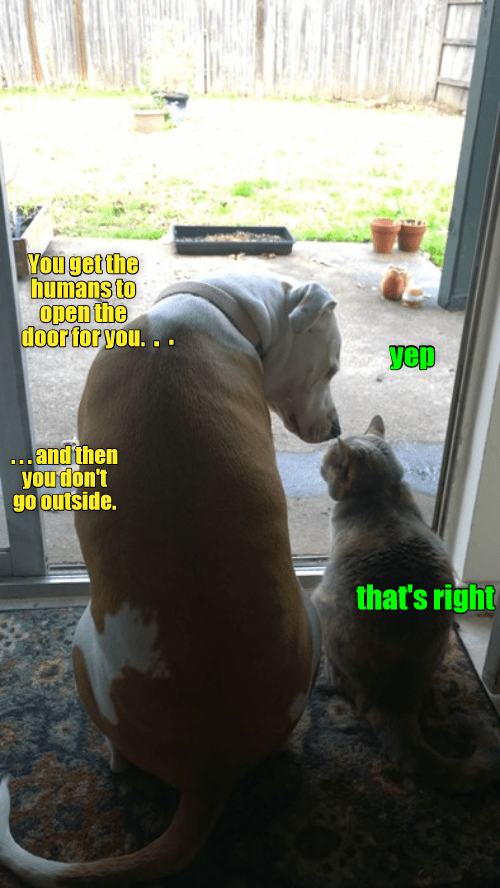 Canidae - You get the humans to open the door for you. בs yeD ...andthen you don't go outside. that's righ