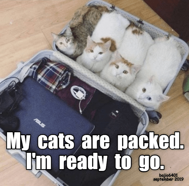 Photo caption - My cats are packed. T'm ready to go. ASUS bajio6401 september 2019