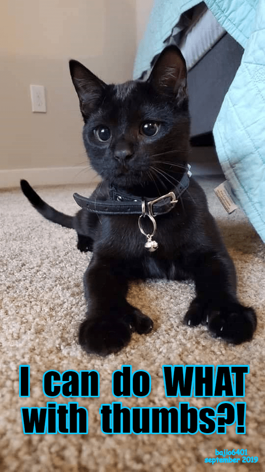 Cat - I can do WHAT with thumbsP! bajio6 401 september 2019