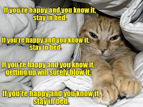 Cat - liyou're happy and you know it, stay in bed. Ifyou're happy and you know it stay in bed. If you're happy and you know it getting up will surelyblow it. liyoutre apuyandvouknow it stay in bedl