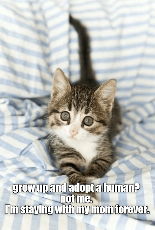 Cat - grow up and adopta human? not me im staying with mymom forever.