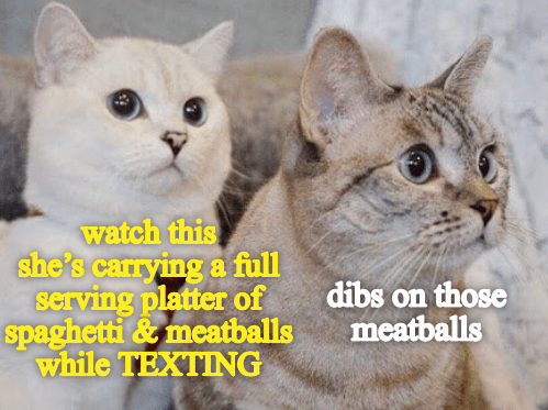 Cat - watch this she's carrying a full serving platter of spaghetti&meatballs while TEXTING dibs on those meatballs