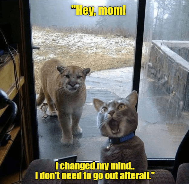"""Felidae - """"Hey, mom! Ichanged my mind.. I don't need to go out afterall."""""""