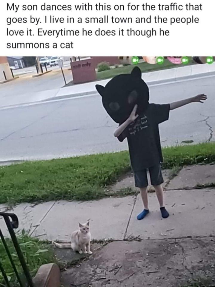 cat memes - 9361310464