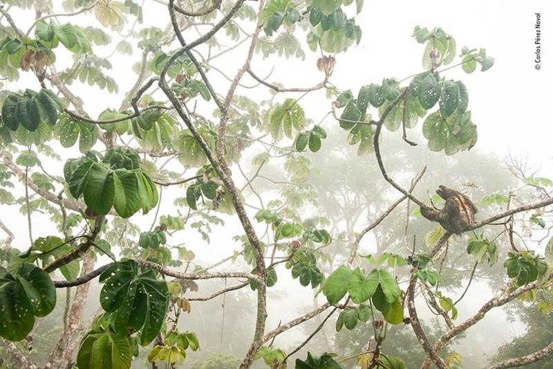 Tree - Carlos Pérez Naval