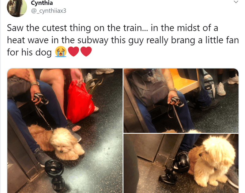 Human - Cynthia @_cynthiiax3 Saw the cutest thing on the train... in the midst of a heat wave in the subway this guy really brang a little fan for his dog