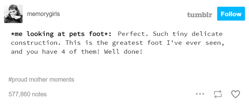 Text - memorygirls Follow tumblr *me looking at pets foot*: Perfect. Such tiny delicate construction. This is the greatest foot I've ever seen, and you have 4 of them! Well done! #proud mother moments 577,860 notes