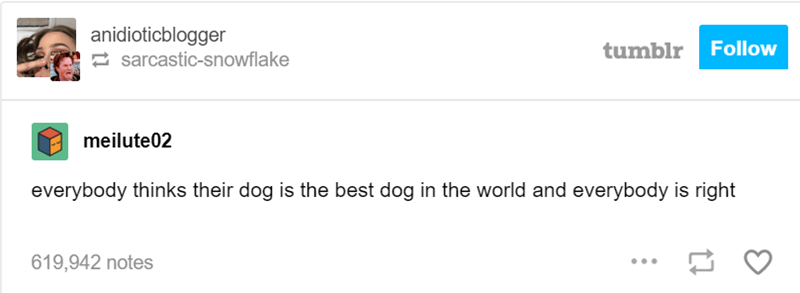 Text - anidioticblogger tumblr Follow sarcastic-snowflake meilute02 everybody thinks their dog is the best dog in the world and everybody is right 619,942 notes