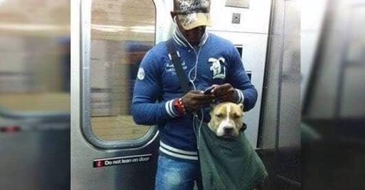 Dog - Do not ean on doo