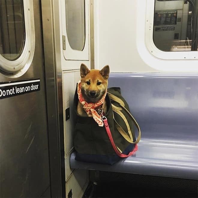 Dog - Do not leanon door