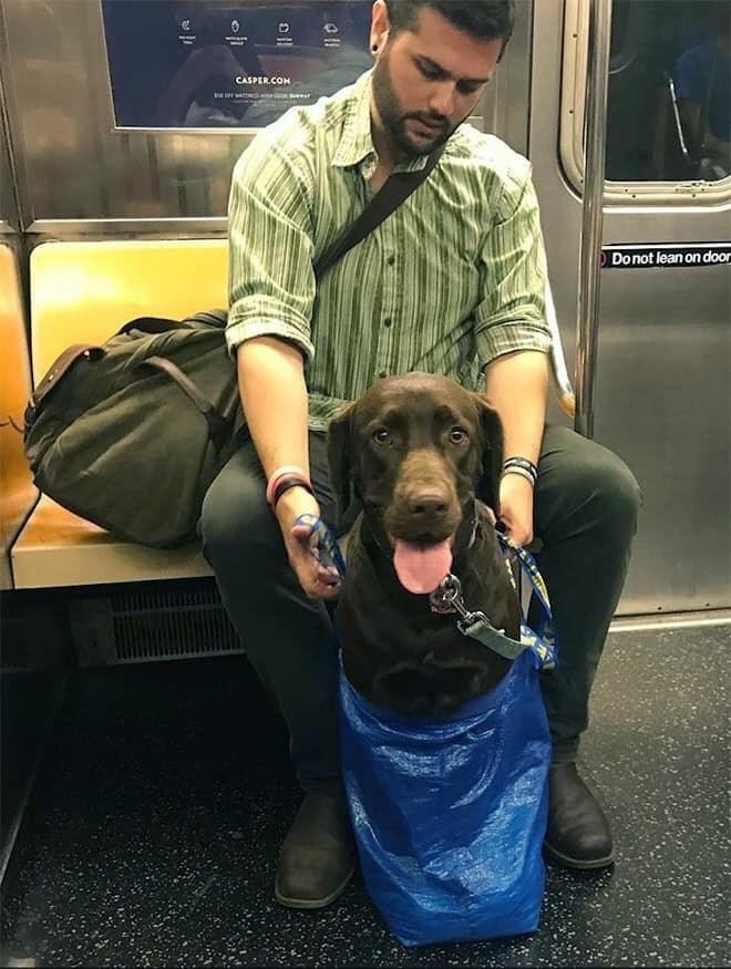 Dog - CASPER.COM Do not lean on do