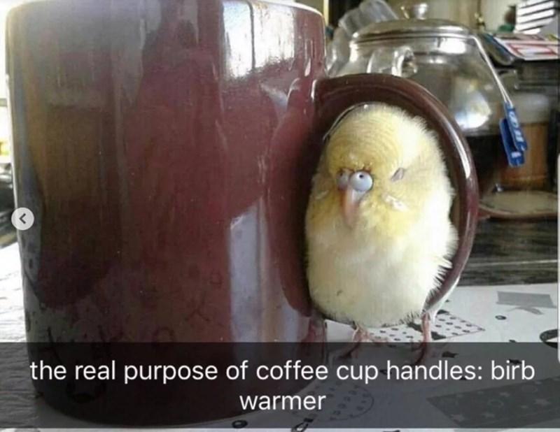 Bird - the real purpose of coffee cup handles: birb warmer