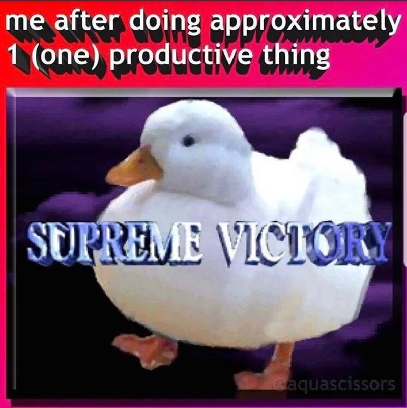 Bird - me after doing approximately 1 (one) productive thing SUPREME VICTORY eaquascissors