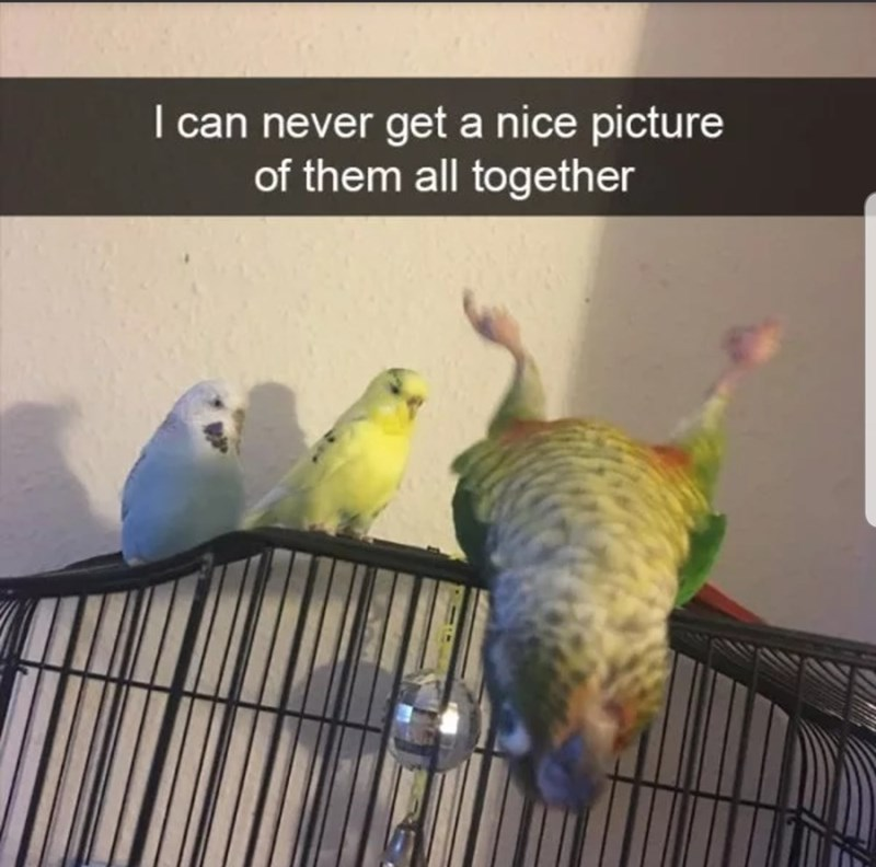 Bird - I can never get a nice picture of them all together