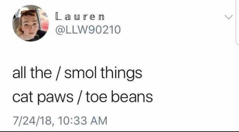 Text - Laure n @LLW90210 all the / smol things cat paws /toe beans 7/24/18, 10:33 AM