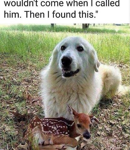 """Dog - wouldn't come when I called him. Then I found this."""""""