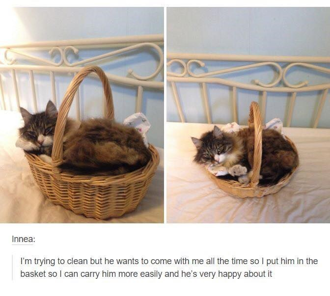 Cat - Innea: I'm trying to clean but he wants to come with me all the time so I put him in the basket so I can carry him more easily and he's very happy about it