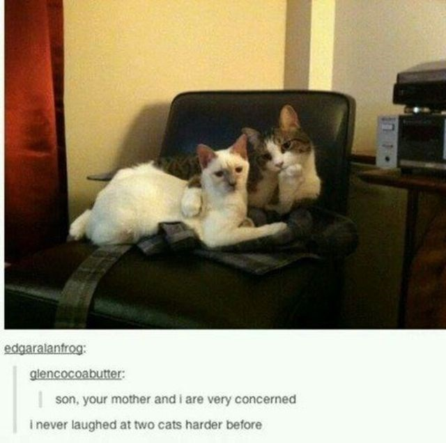Cat - edgaralantrog: glencocoabutter: son, your mother and i are very concerned i never laughed at two cats harder before in