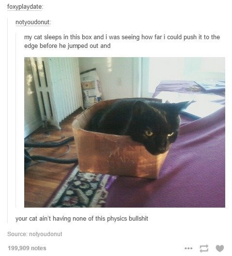 Cat - foxyplaydate: notyoudonut my cat sleeps in this box and i was seeing how far i could push it to the edge before he jumped out and your cat ain't having none of this physics bullshit Source:notyoudonut 199,909 notes