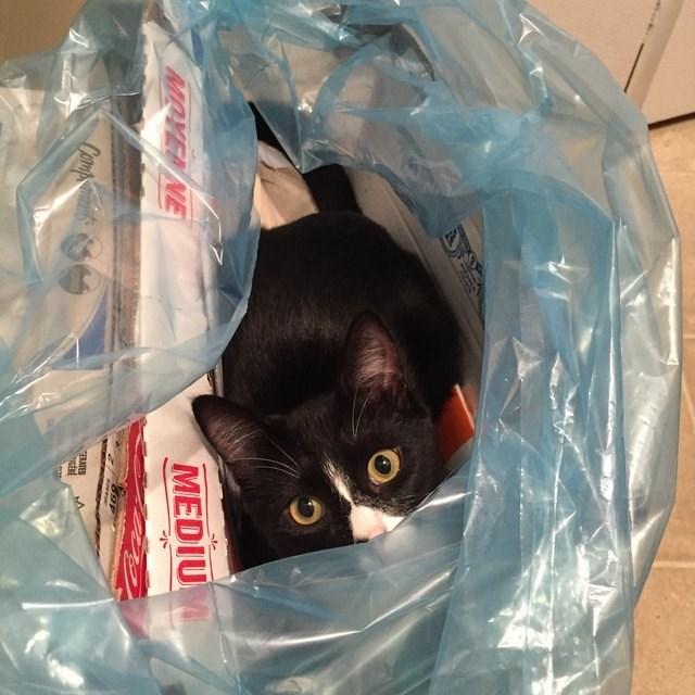 Cat - sle MOVEN NE MEDIUM Canpmants GERATED ERE
