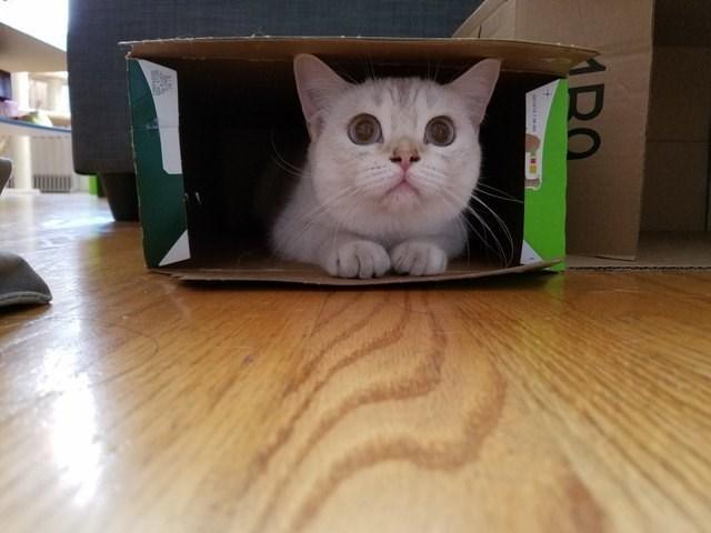 Cat - ARO
