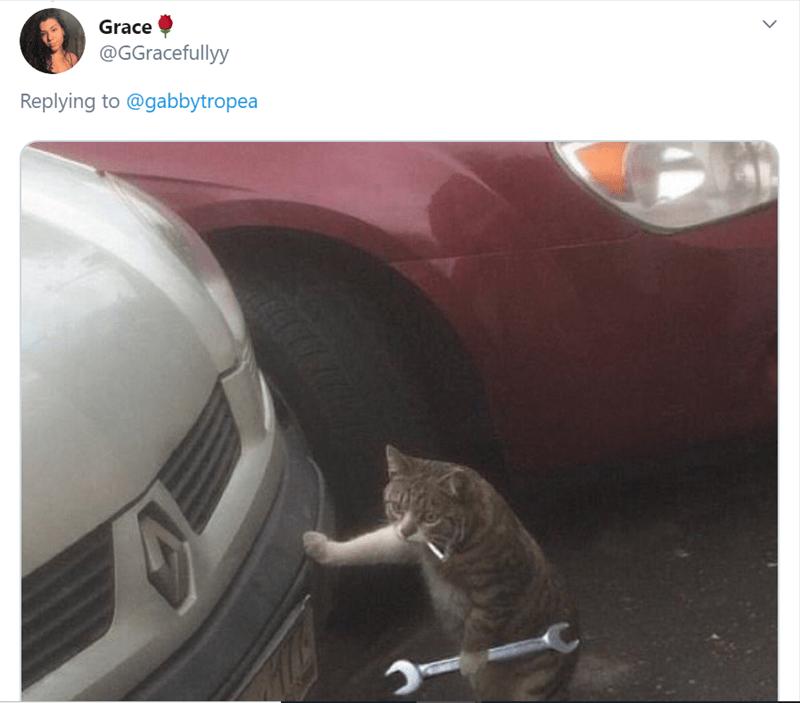 Cat - Grace @GGracefullyy Replying to @gabbytropea