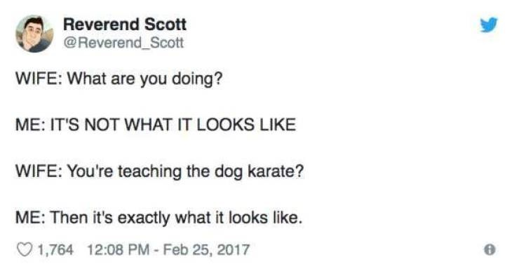 Text - Reverend Scott @Reverend Scott WIFE: What are you doing? ME: IT'S NOT WHAT IT LOOKS LIKE WIFE: You're teaching the dog karate? ME: Then it's exactly what it looks like. 1,764 12:08 PM-Feb 25, 2017