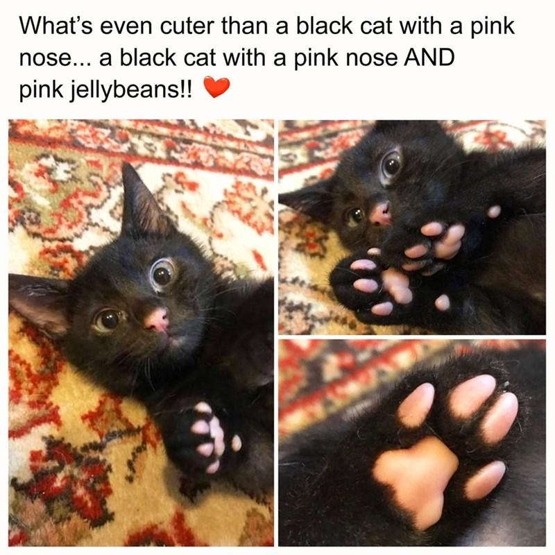 cute cats - 9361797376