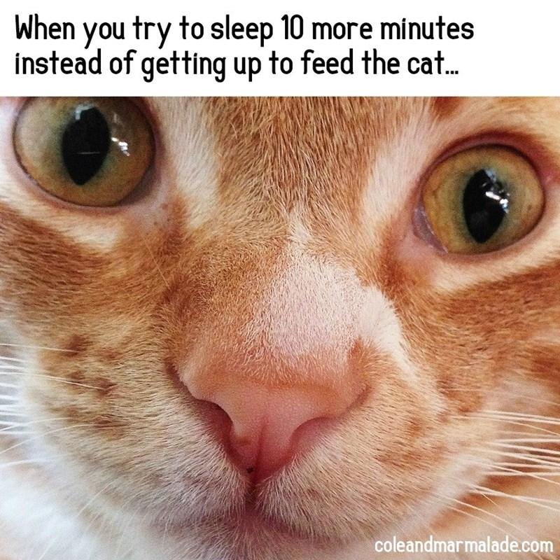 cat memes - 9361798144