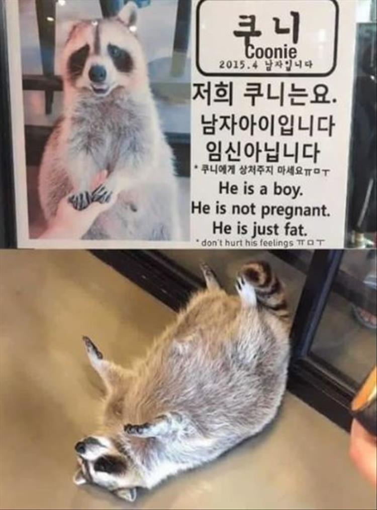 animal memes - 9361801472